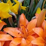 Spring Newsletter Inaugural Edition